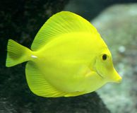 8 рыб тропических Стоковая Фотография