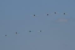 8 самолет-истребителей японских Стоковое Фото