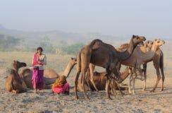 8 2009 kamel puskar ganska november Royaltyfri Foto