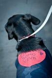 8 2011 mot demonstration kan milan perreras Royaltyfri Foto