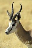 8 afrikanska djur Arkivbild