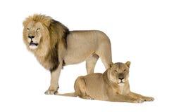 8 ans de panthera de lionne de Lion Image stock