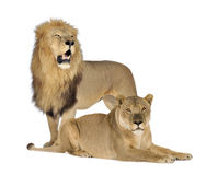 8 ans de panthera de lionne de Lion Images libres de droits