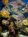 8 coraux d'actinies Photos libres de droits