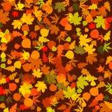 8 leaves för eps för höstbakgrund ljusa Royaltyfri Foto