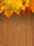8 rabatowych eps spadek liść robi drewnianymi ilustracji