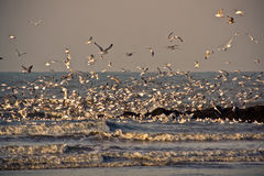 8 seagulls Στοκ φωτογραφία με δικαίωμα ελεύθερης χρήσης