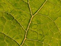 8 texturer Royaltyfria Bilder