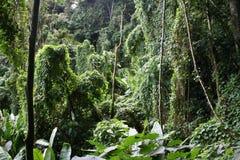 8 tropikalnych cloudforest Zdjęcie Royalty Free