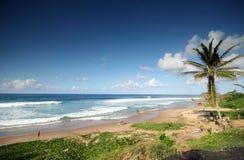 8 tropikalnych plażowych Zdjęcia Stock