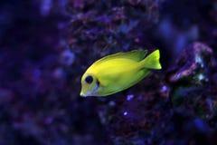 8 tropikalnych ryb Zdjęcie Stock