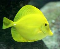 8 tropikalnych ryb Fotografia Stock