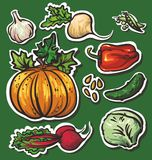 8 Vegetables set: garlic, turnips, squash, beets,. Illustration on a bright green background Stock Photo