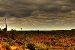 80片沙漠柱仙人掌 免版税库存照片