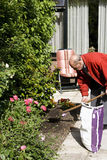 80+ senior working in garden. Healthy 80+ male is digging in garden Stock Images