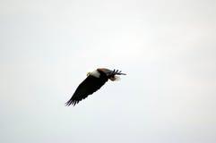 89 ptak Zdjęcia Royalty Free