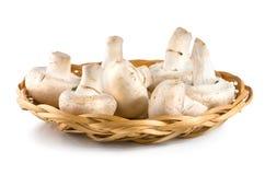 9个篮子JPG蘑菇 免版税图库摄影