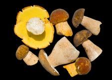 9个蘑菇 库存照片