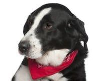 9接近的杂种狗headshot老年 免版税库存图片