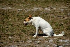 9条狗 免版税库存图片