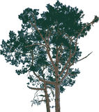 9查出的结构树向量 图库摄影