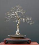 9棵盆景结构树 库存图片