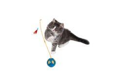 9演奏时间的逗人喜爱的小猫 免版税库存照片