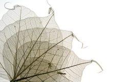 9片干叶子 免版税图库摄影