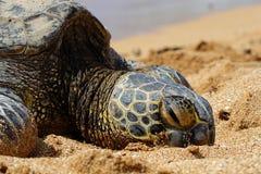 9绿浪乌龟 免版税库存照片
