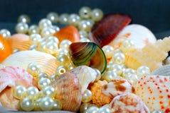 9 σειρές θαλασσινών κοχυ&l Στοκ φωτογραφία με δικαίωμα ελεύθερης χρήσης