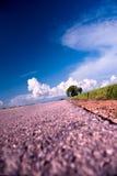 9 σειρές ρυζιού πεδίων Στοκ Εικόνα