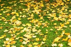 9 листьев осени стоковое фото rf