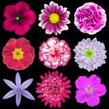 9 различных розовых, пурпуровых, красных изолированных цветков Стоковые Фотографии RF