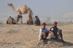 9 2009 kamel puskar ganska november Arkivbilder