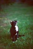 猫9 免版税库存图片