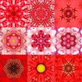 Собрание калейдоскопа 9 красного концентрического мандал цветка Стоковое фото RF