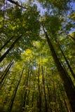 森林高的9月 免版税库存图片