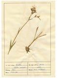 9 ark för 30 herbarium Royaltyfri Fotografi