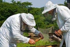 9 beekeepers Fotografering för Bildbyråer