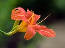 9 blommor arkivfoto