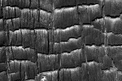 9 bränd texturtree Royaltyfri Fotografi