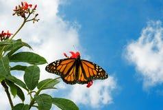 9 a butterfly Zdjęcie Royalty Free