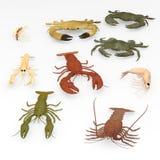 9 crustacean animals. 3d render of 9 crustacean animals Royalty Free Stock Image