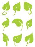 9 folhas verdes do vetor Ilustração do Vetor