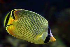 9 tropikalnych ryb Zdjęcia Royalty Free
