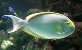 9 tropikalnych ryb Obrazy Stock