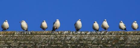 9 Vögel in einer Reihe lizenzfreies stockbild