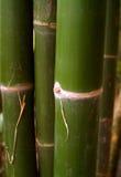 91竹子结构树 库存照片