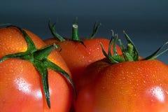 9730 tomate 免版税图库摄影