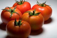 9735 tomate 库存照片